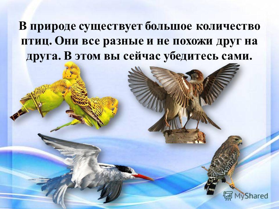 В природе существует большое количество птиц. Они все разные и не похожи друг на друга. В этом вы сейчас убедитесь сами.