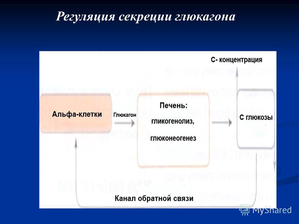 Регуляция секреции глюкагона