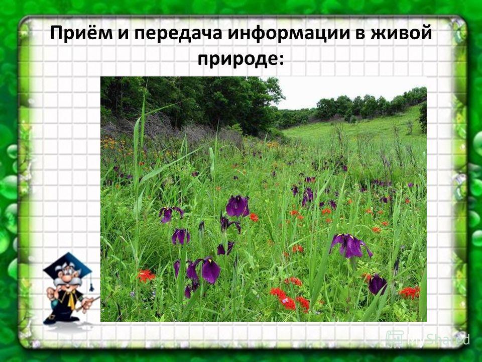 Приём и передача информации в живой природе: