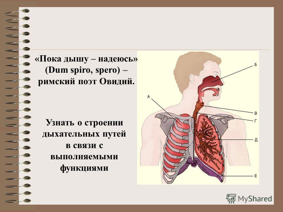 Узнать о строении дыхательных путей в связи с выполняемыми функциями «Пока дышу – надеюсь» (Dum spiro, spero) – римский поэт Овидий.