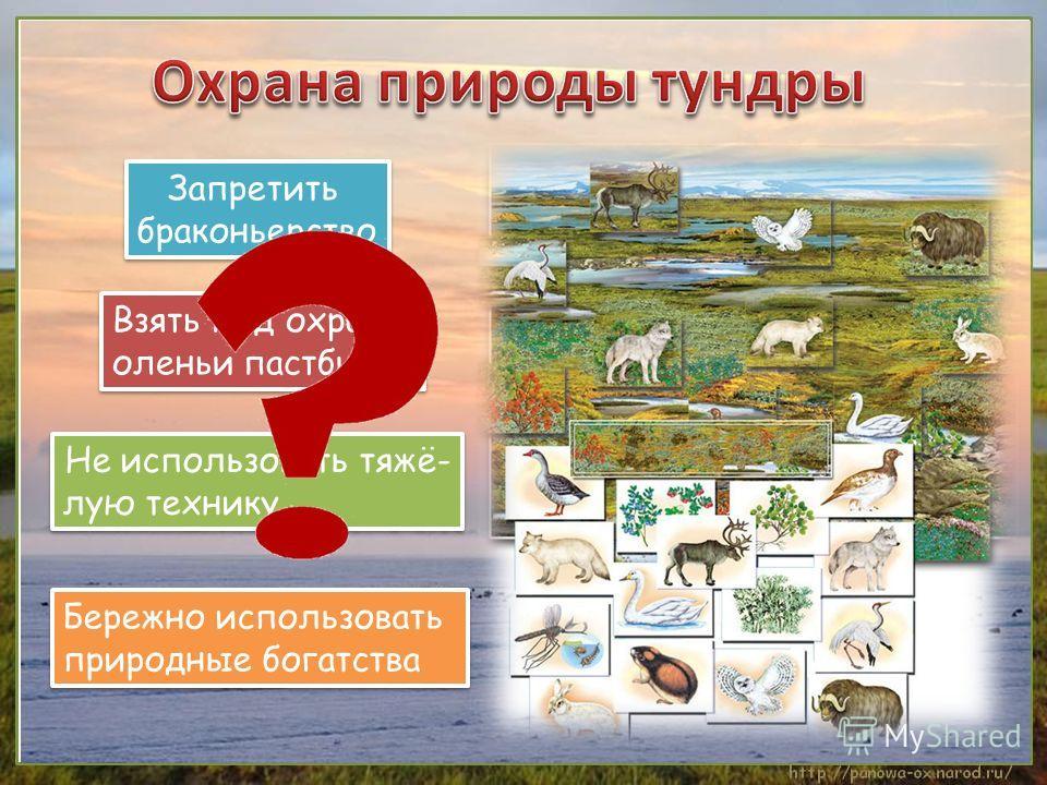 Запретить браконьерство Запретить браконьерство Взять под охрану оленьи пастбища Взять под охрану оленьи пастбища Не использовать тяжё- лую технику Не использовать тяжё- лую технику Бережно использовать природные богатства Бережно использовать природ