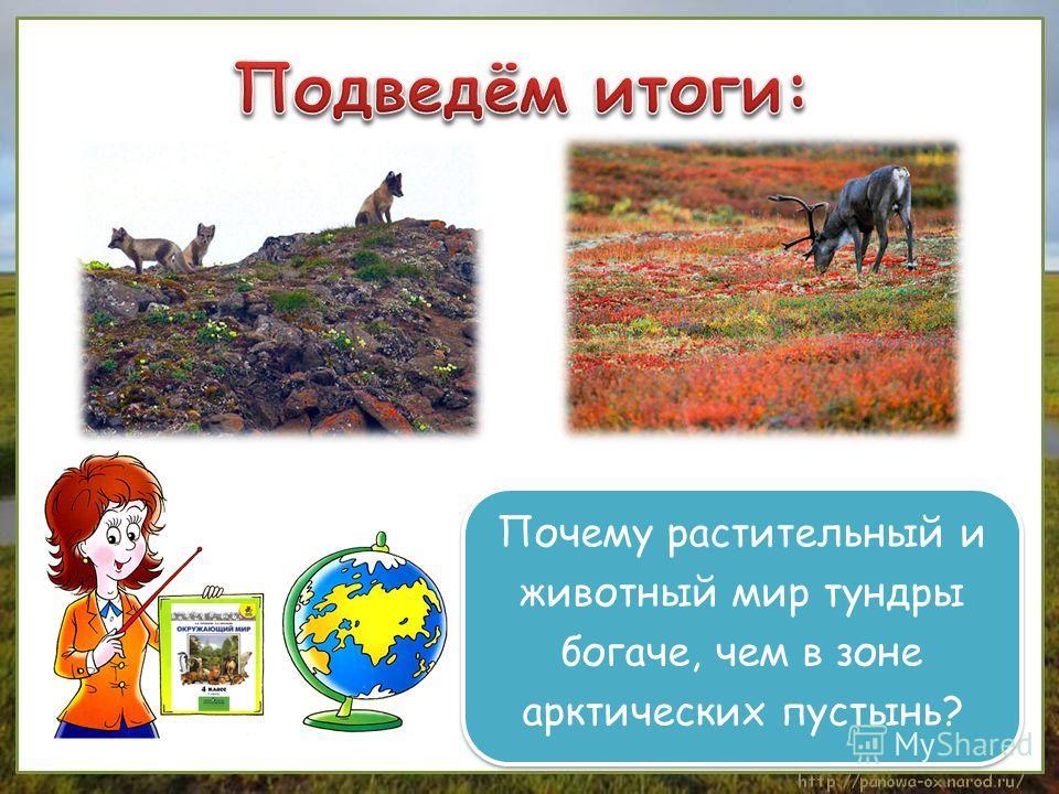 Почему растительный и животный мир тундры богаче, чем в зоне арктических пустынь? Почему растительный и животный мир тундры богаче, чем в зоне арктических пустынь?