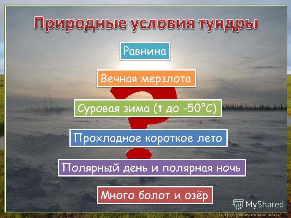 Равнина Полярный день и полярная ночь Вечная мерзлота Суровая зима (t до -50°С) Прохладное короткое лето Много болот и озёр