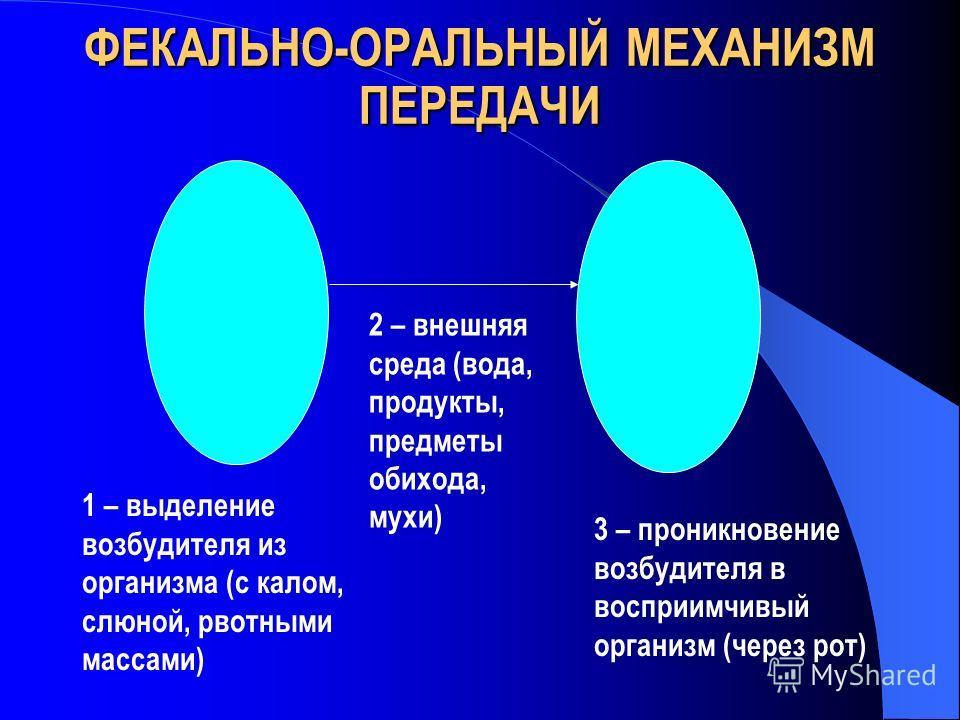 ФЕКАЛЬНО-ОРАЛЬНЫЙ МЕХАНИЗМ ПЕРЕДАЧИ 1 – выделение возбудителя из организма (с калом, слюной, рвотными массами) 2 – внешняя среда (вода, продукты, предметы обихода, мухи) 3 – проникновение возбудителя в восприимчивый организм (через рот)