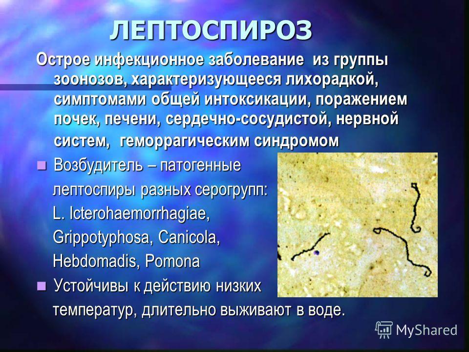 Лептоспироз фото