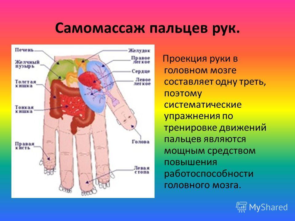 Самомассаж пальцев рук. Проекция руки в головном мозге составляет одну треть, поэтому систематические упражнения по тренировке движений пальцев являются мощным средством повышения работоспособности головного мозга.