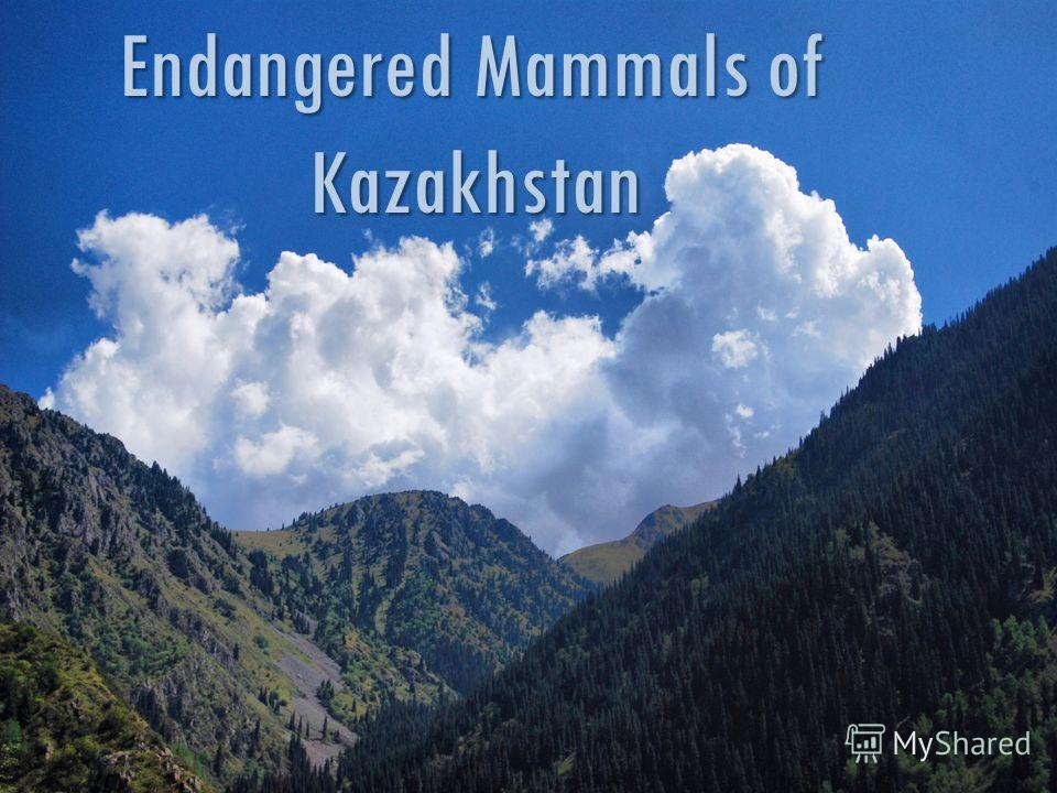 Endangered Mammals of Kazakhstan