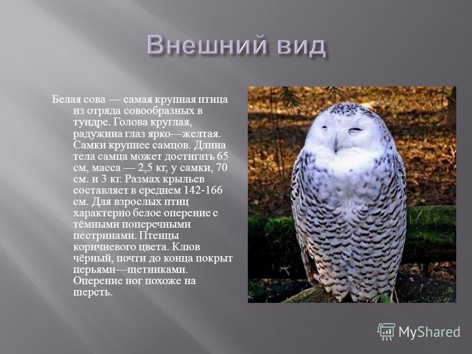 Перо жарптицы 2 музыка птица синица