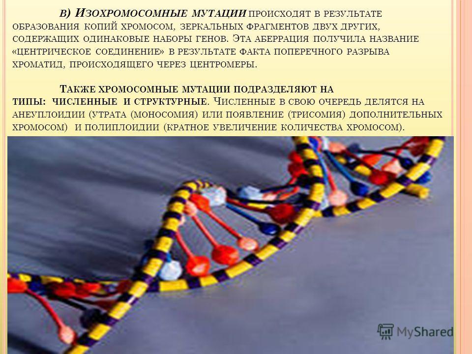 В ) И ЗОХРОМОСОМНЫЕ МУТАЦИИ ПРОИСХОДЯТ В РЕЗУЛЬТАТЕ ОБРАЗОВАНИЯ КОПИЙ ХРОМОСОМ, ЗЕРКАЛЬНЫХ ФРАГМЕНТОВ ДВУХ ДРУГИХ, СОДЕРЖАЩИХ ОДИНАКОВЫЕ НАБОРЫ ГЕНОВ. Э ТА АБЕРРАЦИЯ ПОЛУЧИЛА НАЗВАНИЕ « ЦЕНТРИЧЕСКОЕ СОЕДИНЕНИЕ » В РЕЗУЛЬТАТЕ ФАКТА ПОПЕРЕЧНОГО РАЗРЫВА