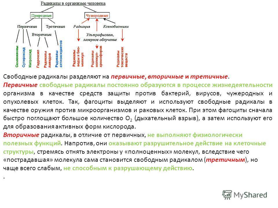 Свободные радикалы разделяют на первичные, вторичные и третичные. Первичные свободные радикалы постоянно образуются в процессе жизнедеятельности организма в качестве средств защиты против бактерий, вирусов, чужеродных и опухолевых клеток. Так, фагоци