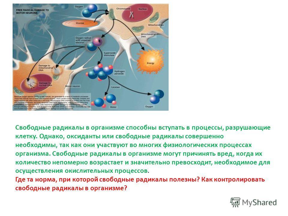 Свободные радикалы в организме способны вступать в процессы, разрушающие клетку. Однако, оксиданты или свободные радикалы совершенно необходимы, так как они участвуют во многих физиологических процессах организма. Свободные радикалы в организме могут
