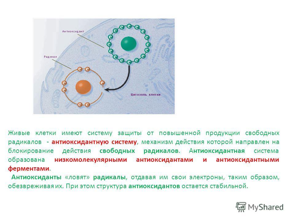 Живые клетки имеют систему защиты от повышенной продукции свободных радикалов - антиоксидантную систему, механизм действия которой направлен на блокирование действия свободных радикалов. Антиоксидантная система образована низкомолекулярными антиоксид
