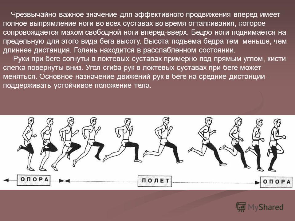 Чрезвычайно важное значение для эффективного продвижения вперед имеет полное выпрямление ноги во всех суставах во время отталкивания, которое сопровождается махом свободной ноги вперед-вверх. Бедро ноги поднимается на предельную для этого вида бега в