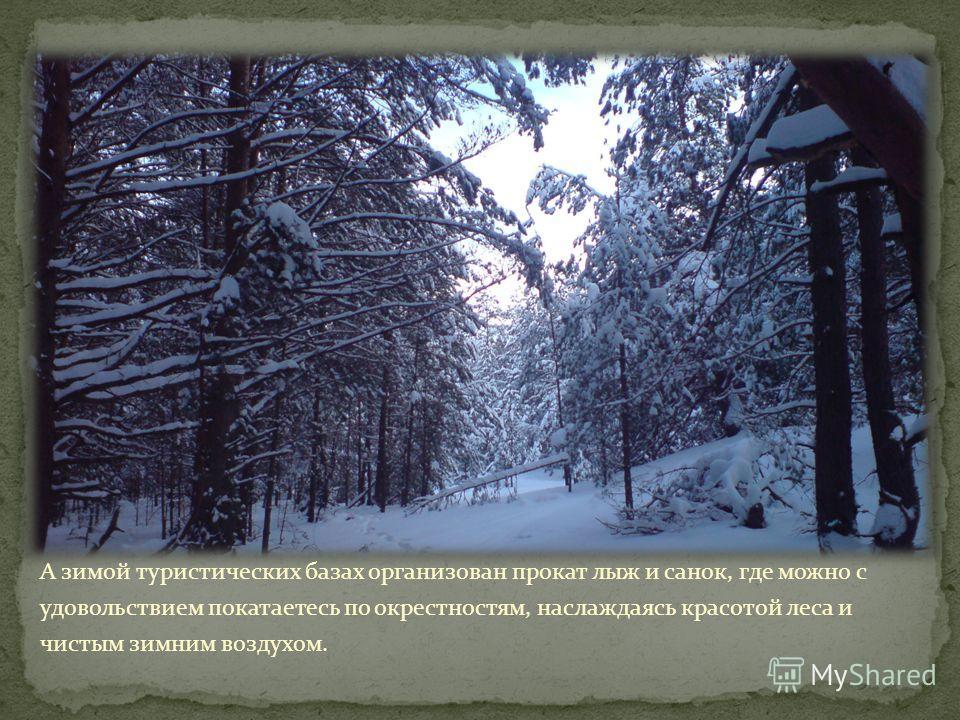 А зимой туристических базах организован прокат лыж и санок, где можно с удовольствием покатаетесь по окрестностям, наслаждаясь красотой леса и чистым зимним воздухом.