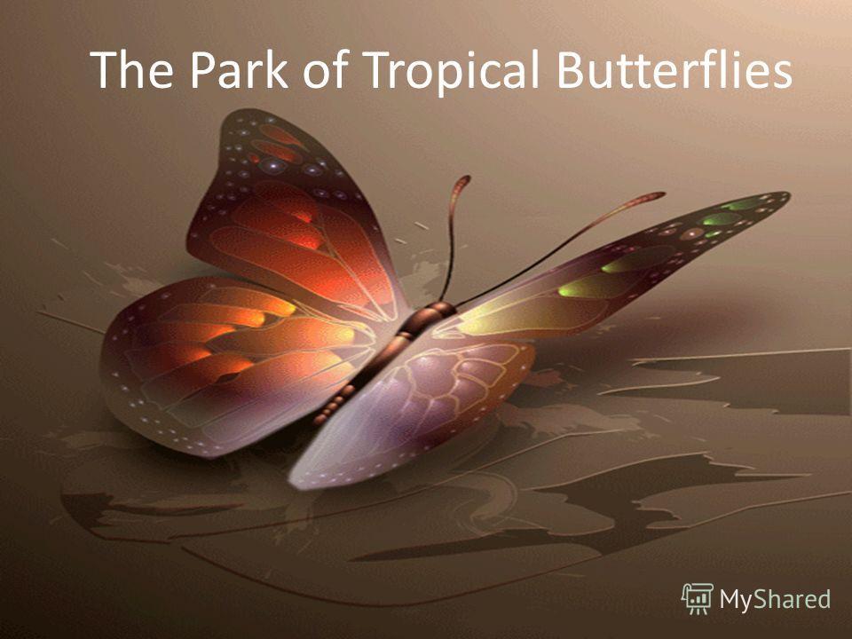 The Park of Tropical Butterflies