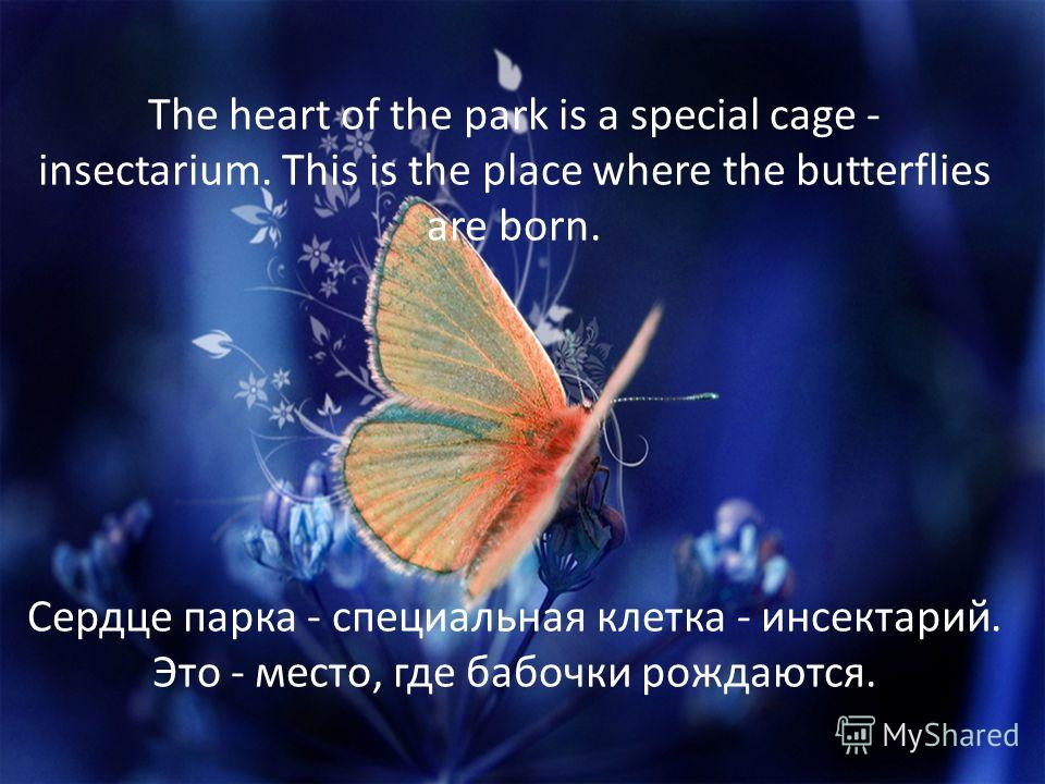 The heart of the park is a special cage - insectarium. This is the place where the butterflies are born. Сердце парка - специальная клетка - инсектарий. Это - место, где бабочки рождаются.