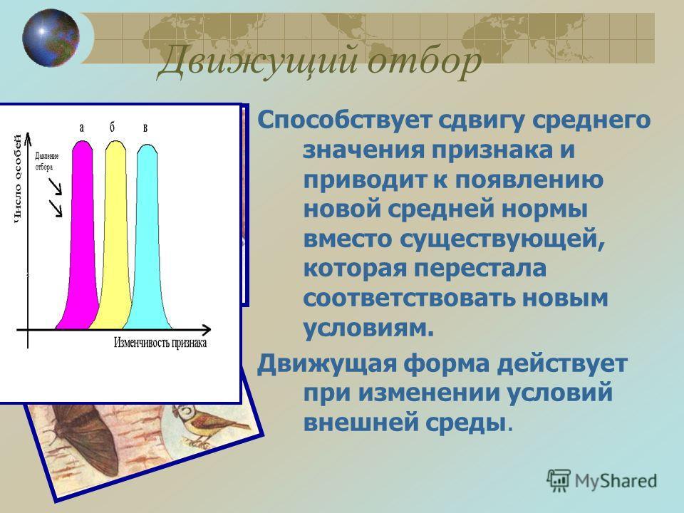 Стабилизирующий отбор Латимерия – палеозойская (девон) 570 млн лет Черепахи – триас 200 млн лет Гаттерия – юрский период 165 млн лет