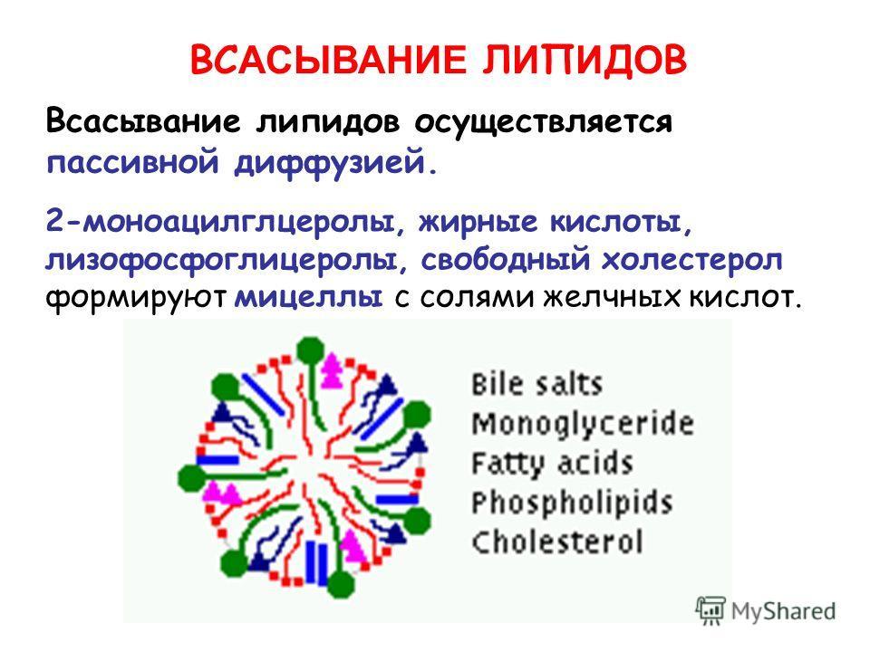 ВС АСЫВАНИЕ Л И П И Д О В 2-моноацилглцеролы, жирные кислоты, лизофосфоглицеролы, свободный холестерол формируют мицеллы с солями желчных кислот. Всасывание липидов осуществляется пассивной диффузией.