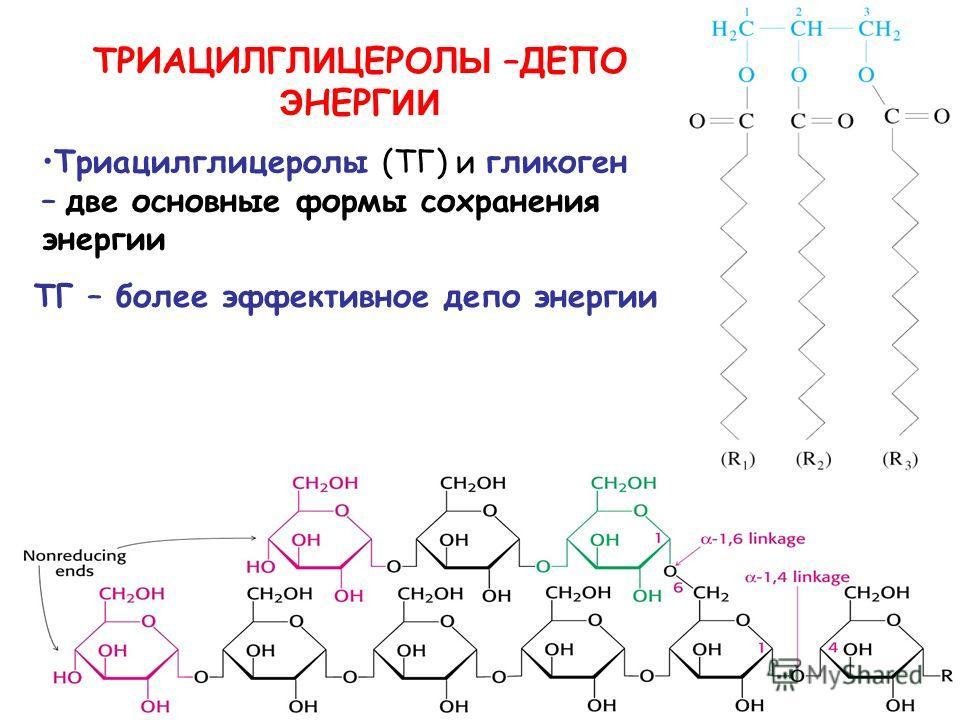 ТРИАЦИЛГЛ И ЦЕРОЛ Ы –ДЕПО Э НЕРГ ИИ Триацилглицеролы (ТГ) и гликоген – две основные формы сохранения энергии ТГ – более эффективное депо энергии