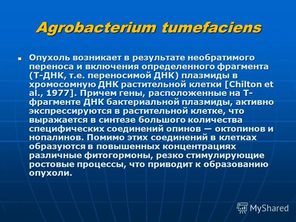 Agrobacterium tumefaciens Опухоль возникает в результате необратимого переноса и включения определенного фрагмента (Т-ДНК, т.е. переносимой ДНК) плазмиды в хромосомную ДНК растительной клетки [Chilton et al., 1977]. Причем гены, расположенные на Т- ф