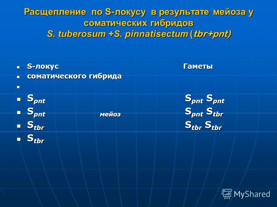 Расщепление по S- локусу в результате мейоза у соматических гибридов S. tuberosum +S. pinnatisectum ( tbr+pnt) S-локус Гаметы S-локус Гаметы соматического гибрида соматического гибрида S pnt S pnt S pnt S pnt S pnt S pnt S pntмейоз S pnt S tbr S pntм