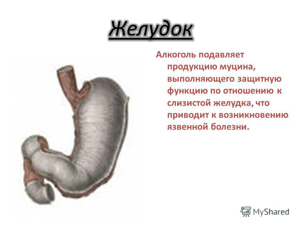 Алкоголь подавляет продукцию муцина, выполняющего защитную функцию по отношению к слизистой желудка, что приводит к возникновению язвенной болезни.
