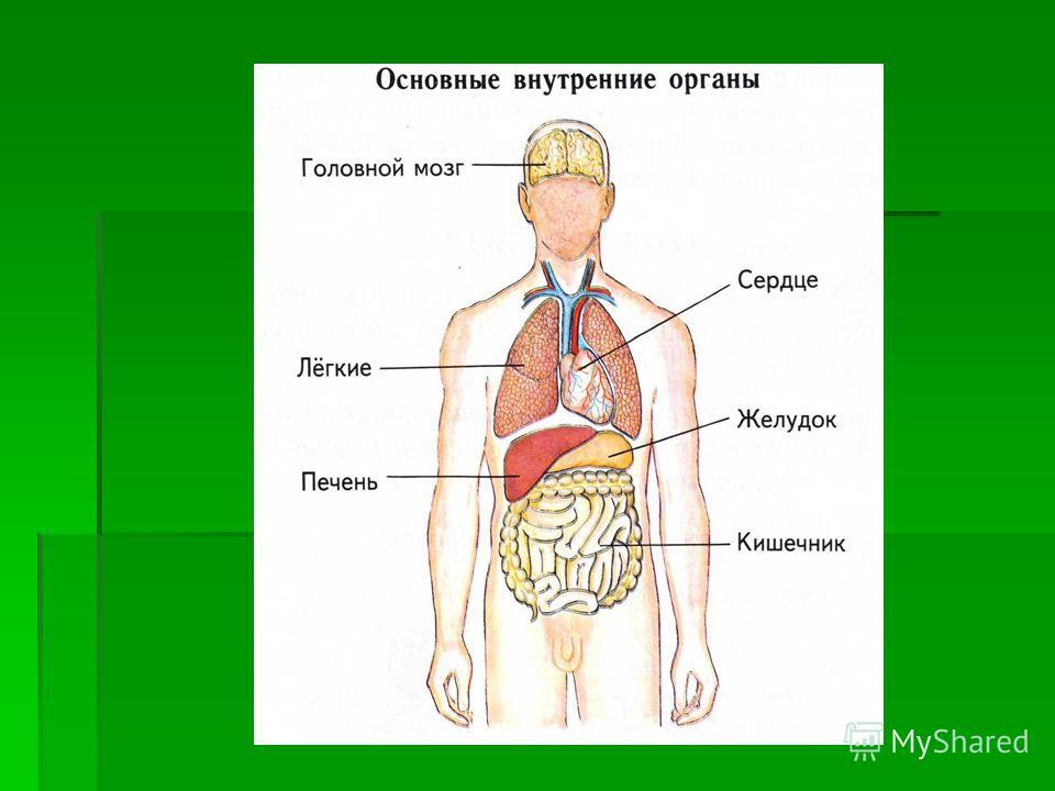 При кифозе боль в грудном отделе позвоночника