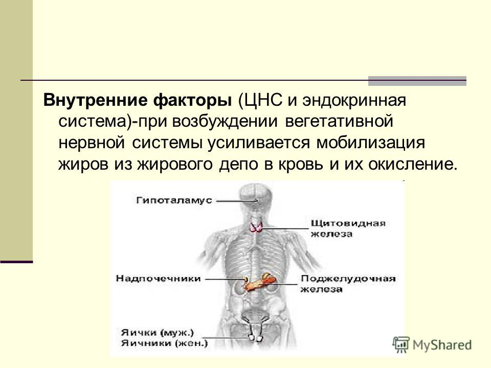 Внутренние факторы (ЦНС и эндокринная система)-при возбуждении вегетативной нервной системы усиливается мобилизация жиров из жирового депо в кровь и их окисление.