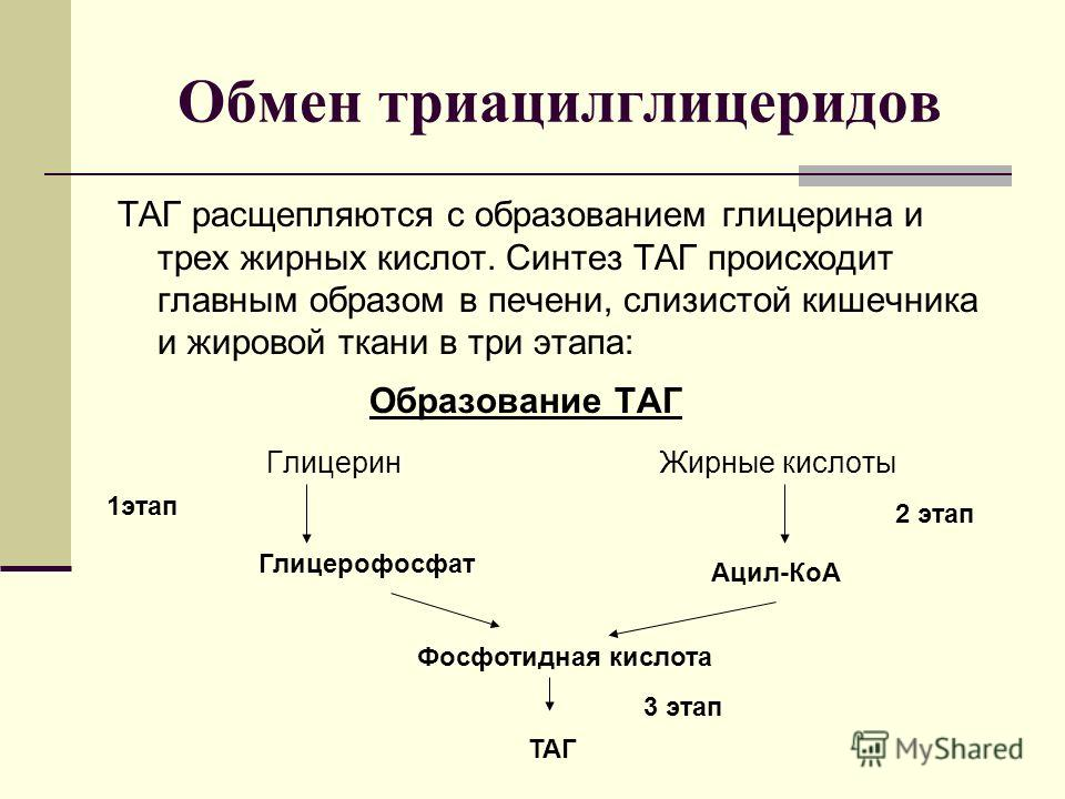 Обмен триацилглицеридов ТАГ расщепляются с образованием глицерина и трех жирных кислот. Синтез ТАГ происходит главным образом в печени, слизистой кишечника и жировой ткани в три этапа: Образование ТАГ Глицерин Жирные кислоты Глицерофосфат Ацил-КоА Фо