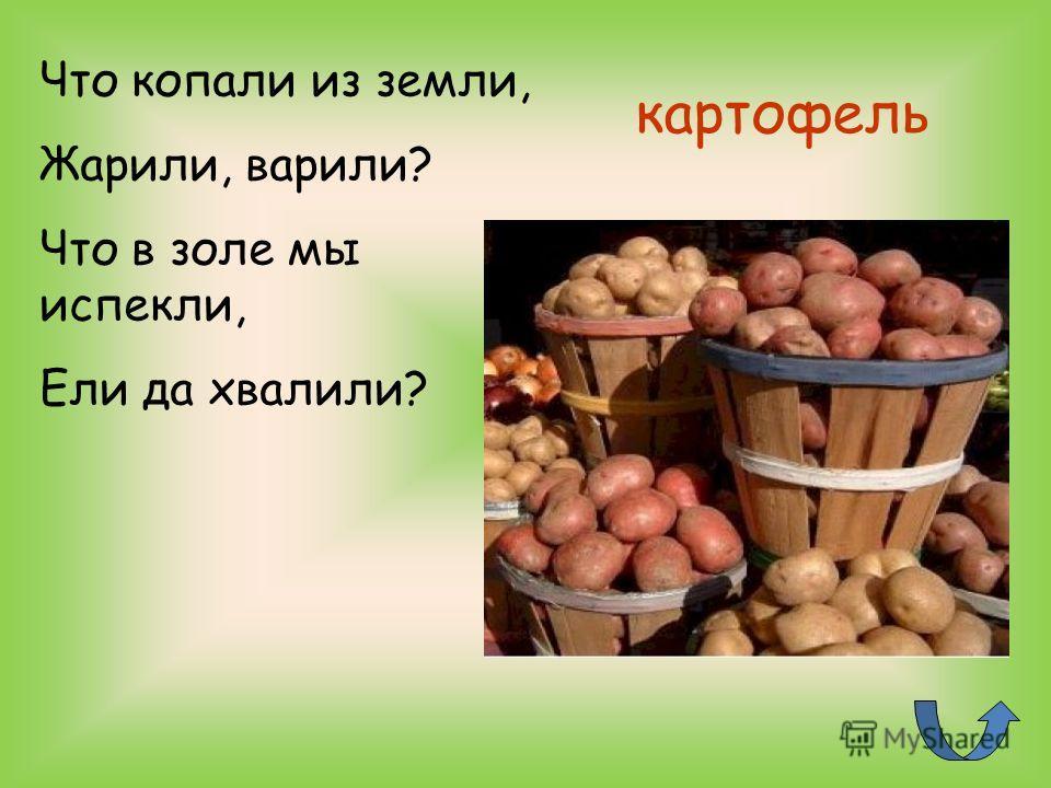 картофель Что копали из земли, Жарили, варили? Что в золе мы испекли, Ели да хвалили?