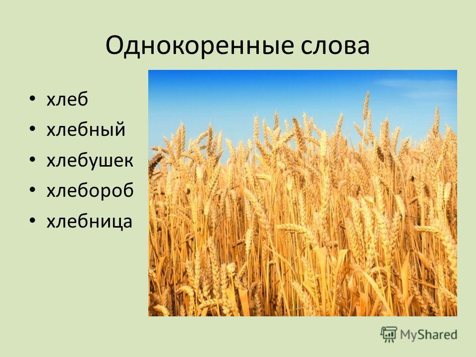 Однокоренные слова хлеб хлебный хлебушек хлебороб хлебница