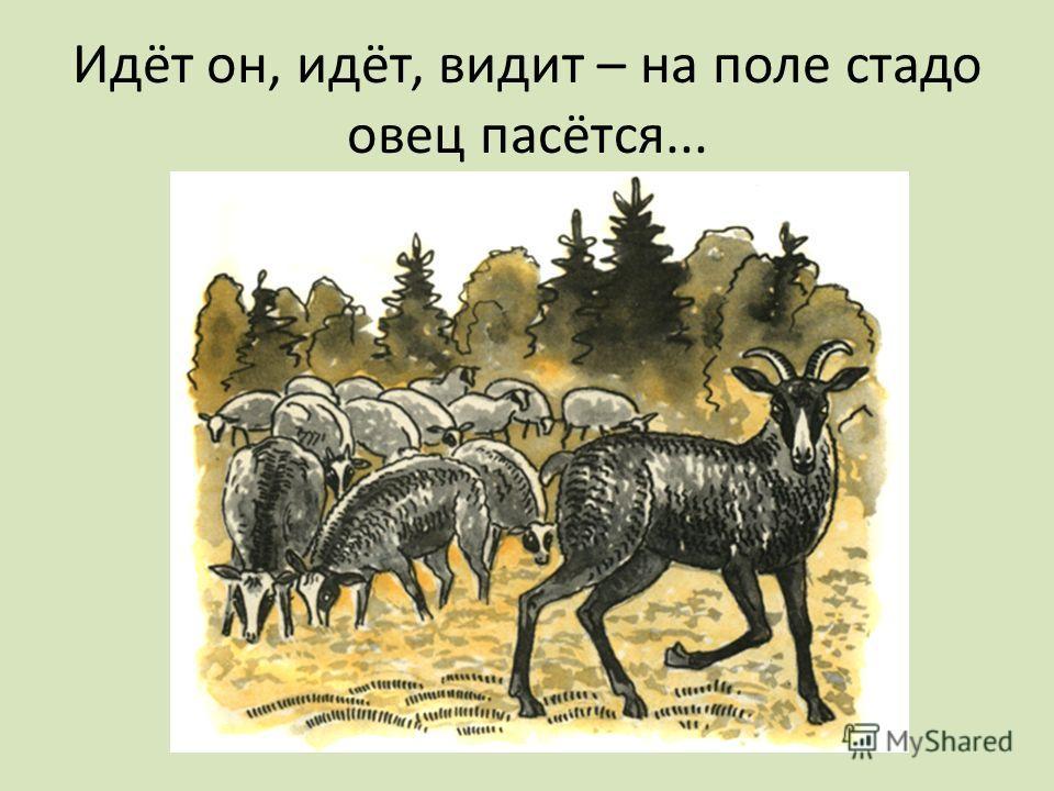 Идёт он, идёт, видит – на поле стадо овец пасётся...