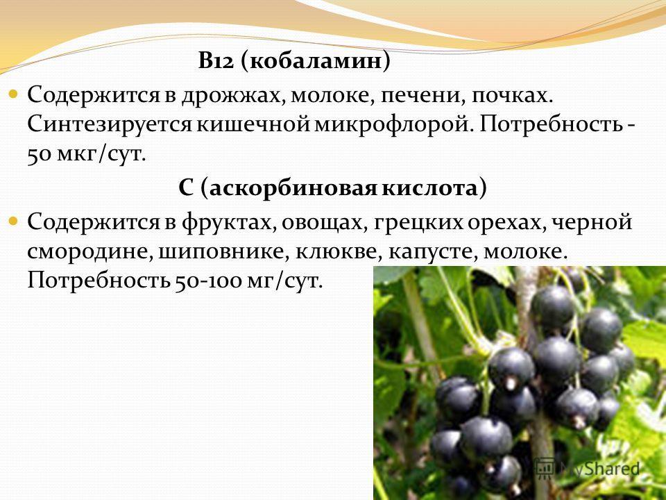 В12 (кобаламин) Содержится в дрожжах, молоке, печени, почках. Синтезируется кишечной микрофлорой. Потребность - 50 мкг/сут. С (аскорбиновая кислота) Содержится в фруктах, овощах, грецких орехах, черной смородине, шиповнике, клюкве, капусте, молоке. П