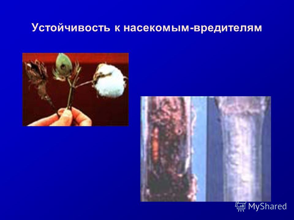 Устойчивость к насекомым-вредителям