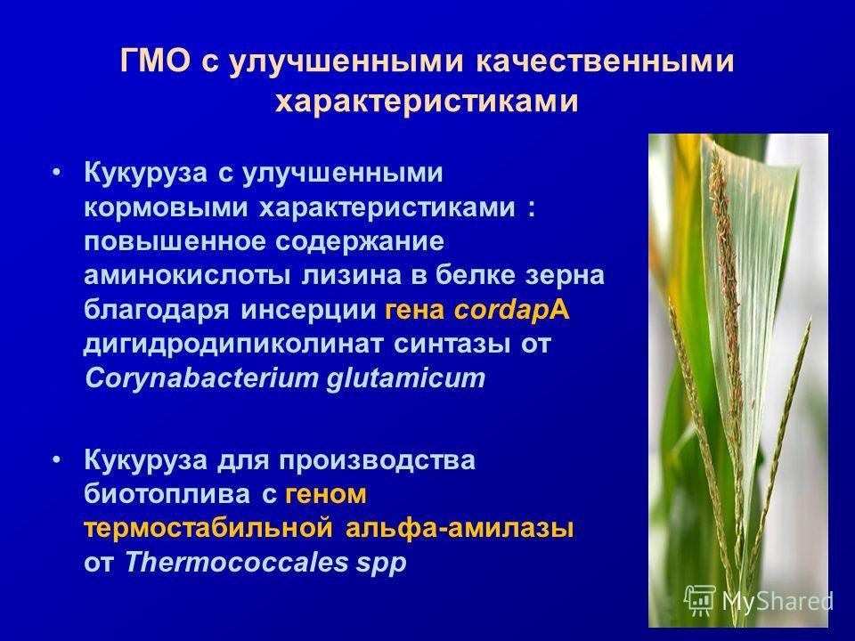 ГМО с улучшенными качественными характеристиками Кукуруза с улучшенными кормовыми характеристиками : повышенное содержание аминокислоты лизина в белке зерна благодаря инсерции гена cordapA дигидродипиколинат синтазы от Corynabacterium glutamicum Куку