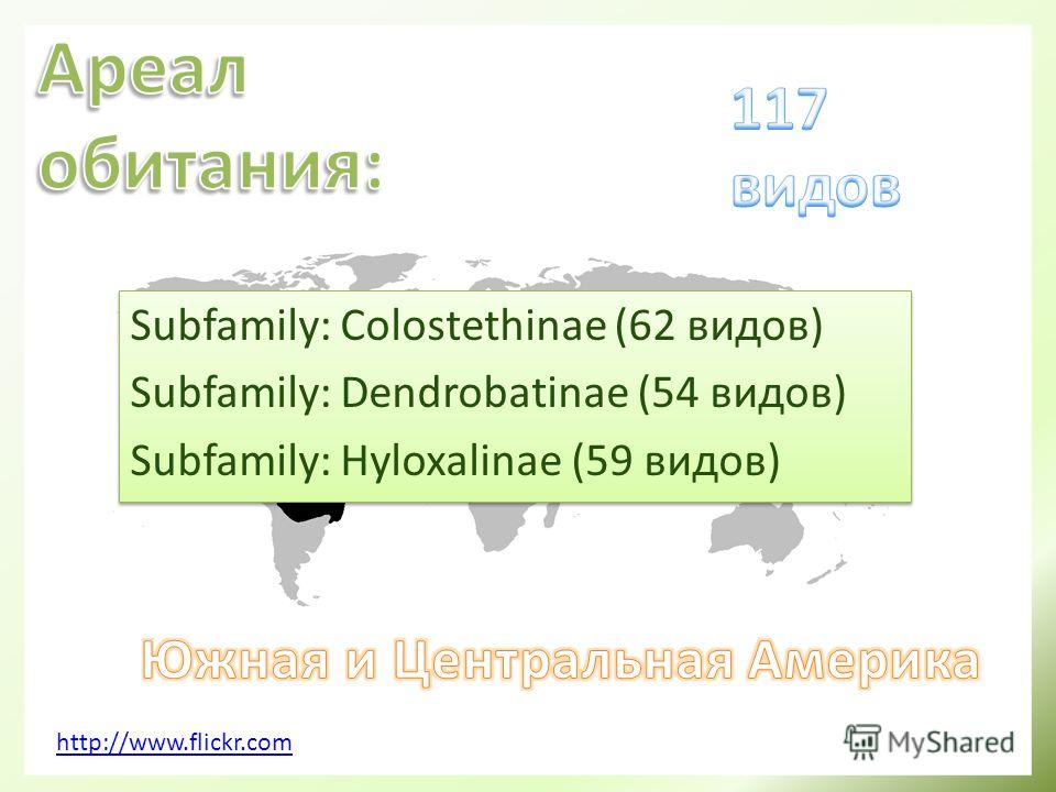 http://www.flickr.com Subfamily: Colostethinae (62 видов) Subfamily: Dendrobatinae (54 видов) Subfamily: Hyloxalinae (59 видов) Subfamily: Colostethinae (62 видов) Subfamily: Dendrobatinae (54 видов) Subfamily: Hyloxalinae (59 видов)
