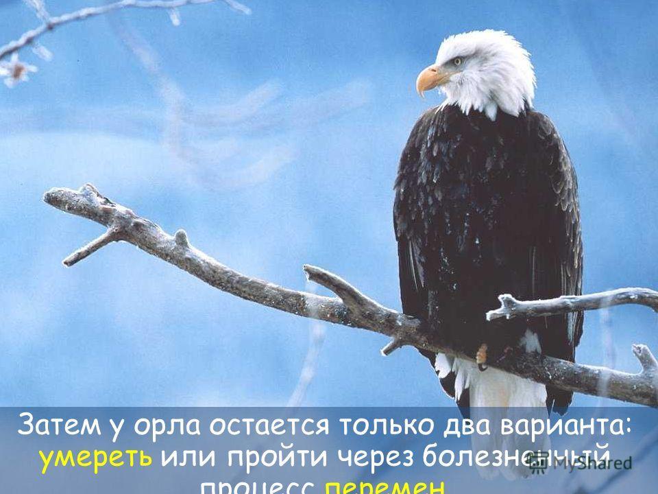 28 Его пожилые и тяжелые крылья, из-за толщины перьев застревают в груди и затрудняют полет.