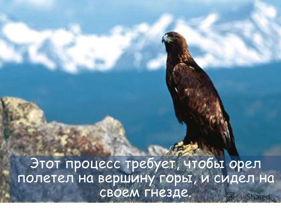 29 Затем у орла остается только два варианта: умереть или пройти через болезненный процесс перемен.