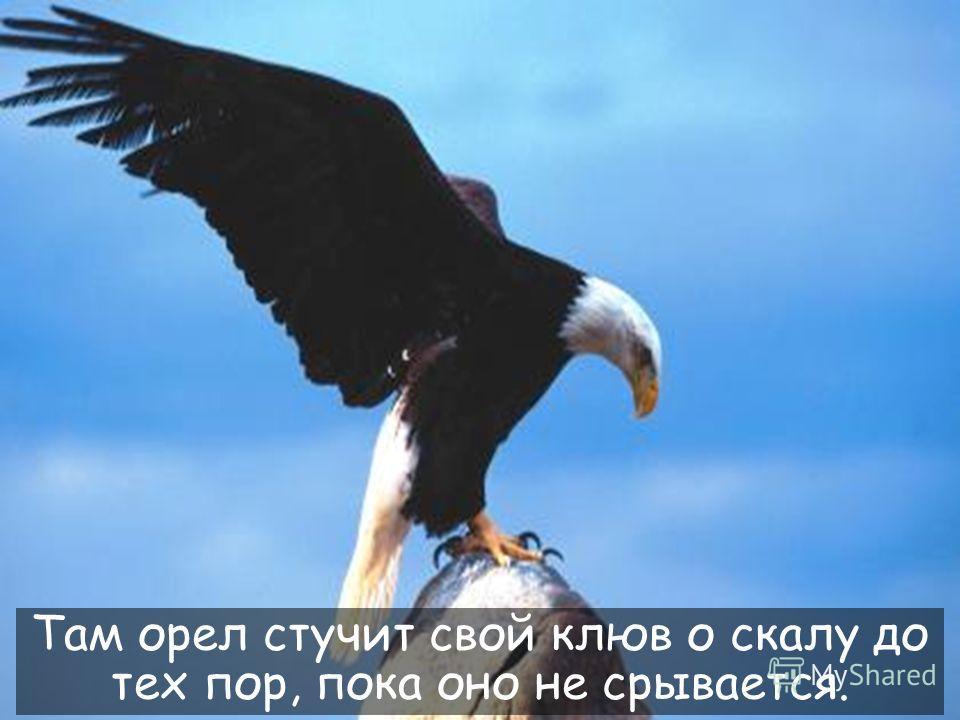 30 Этот процесс требует, чтобы орел полетел на вершину горы, и сидел на своем гнезде.