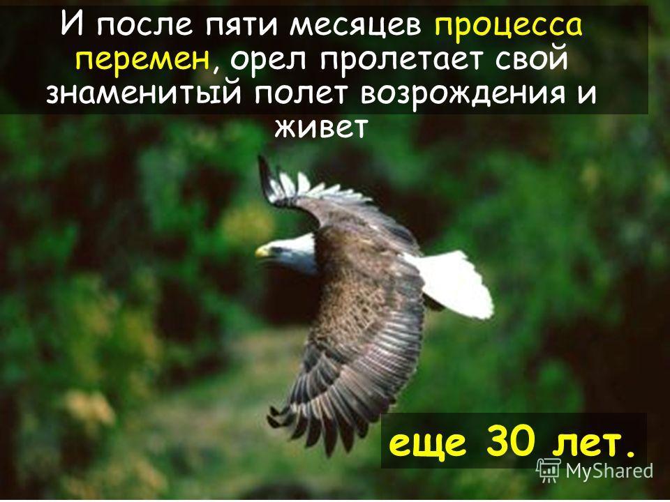 33 Когда его новые когти отрастают, орел начинает выщипывать свои пожилые перья.