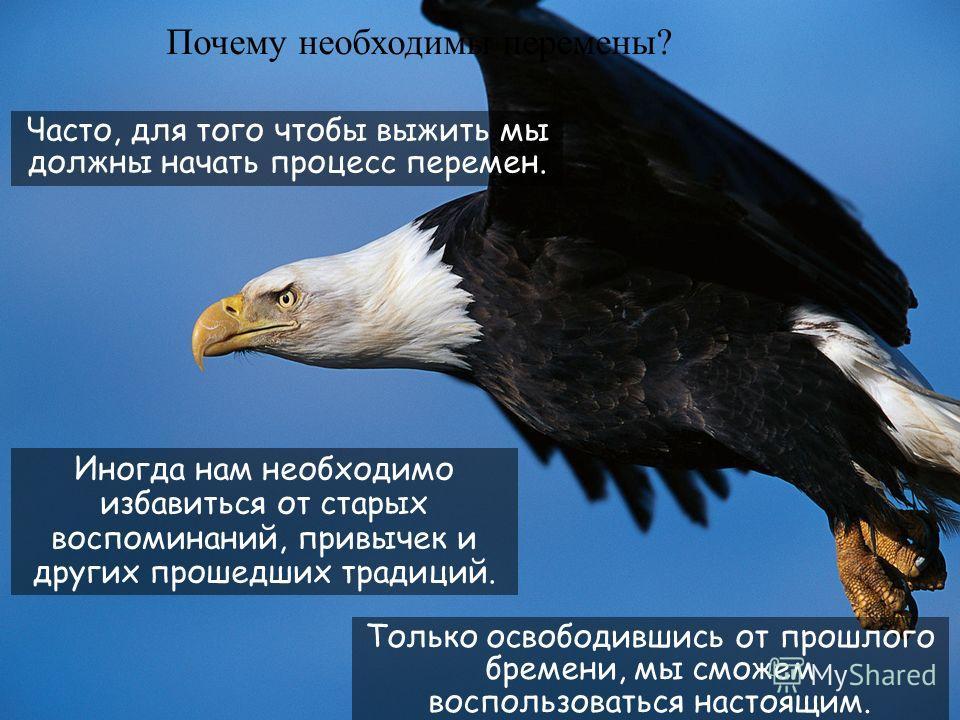 34 еще 30 лет. И после пяти месяцев процесса перемен, орел пролетает свой знаменитый полет возрождения и живет