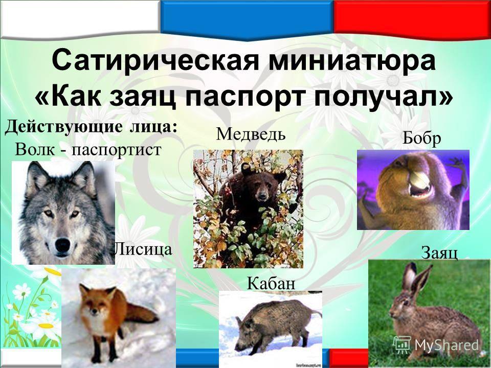 Сатирическая миниатюра «Как заяц паспорт получал» Действующие лица: Волк - паспортист Заяц Лисица Медведь Бобр Кабан