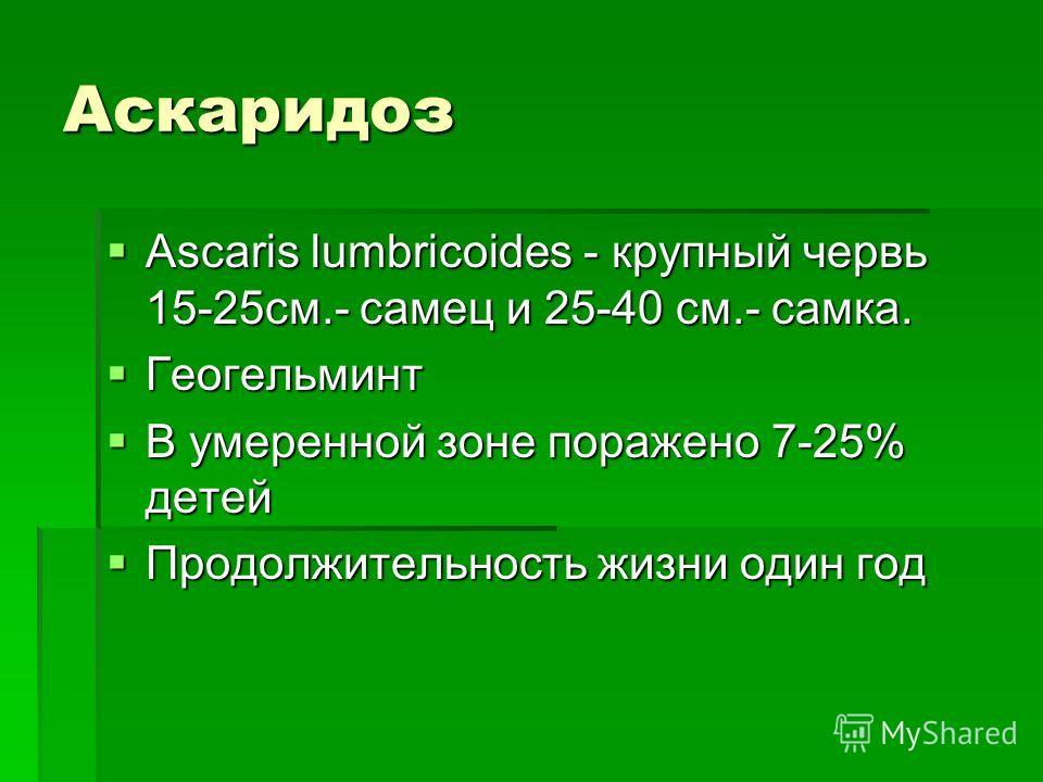 Аскаридоз Ascaris lumbricoides - крупный червь 15-25см.- самец и 25-40 см.- самка. Ascaris lumbricoides - крупный червь 15-25см.- самец и 25-40 см.- самка. Геогельминт Геогельминт В умеренной зоне поражено 7-25% детей В умеренной зоне поражено 7-25%