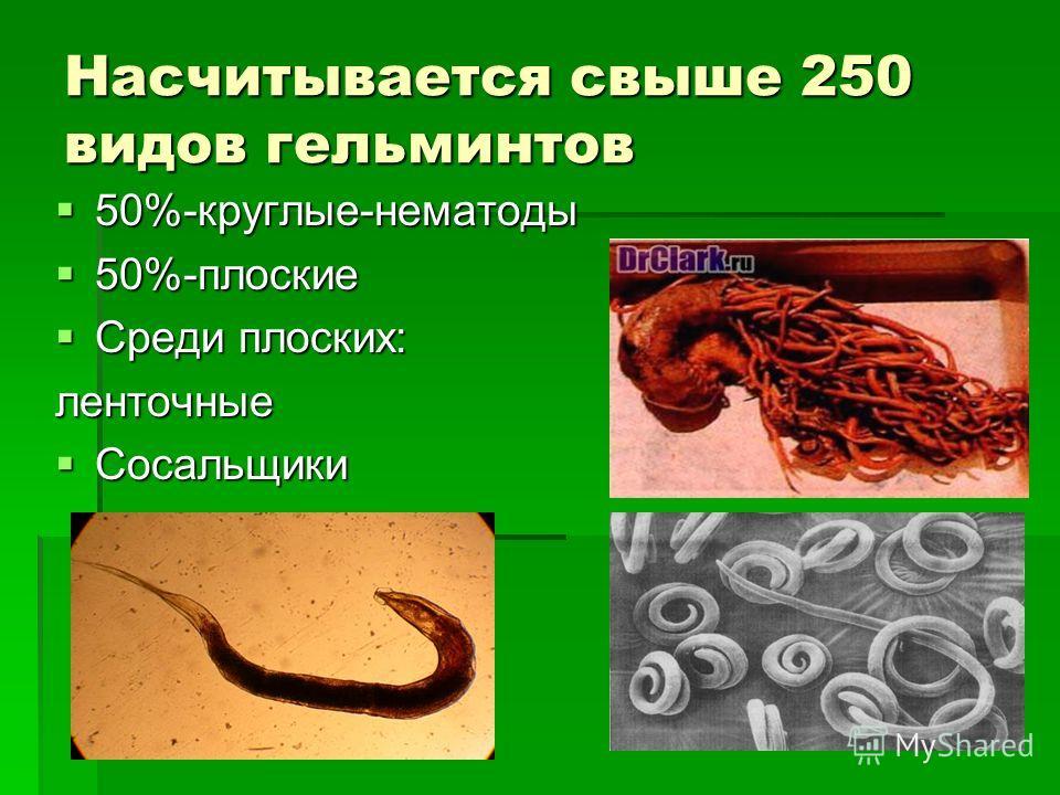 Насчитывается свыше 250 видов гельминтов 50%-круглые-нематоды 50%-круглые-нематоды 50%-плоские 50%-плоские Среди плоских: Среди плоских:ленточные Сосальщики Сосальщики