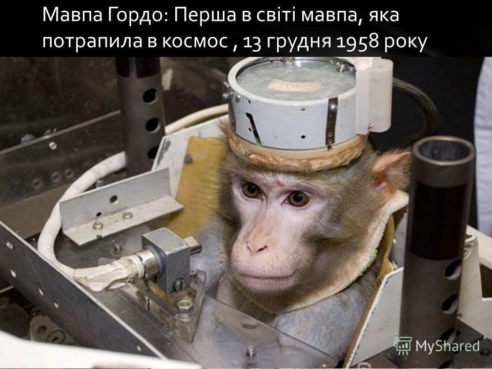 Мавпа Гордо: Перша в світі мавпа, яка потрапила в космос, 13 грудня 1958 року