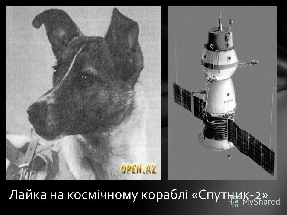 Лайка на космічному кораблі «Cпутник-2»