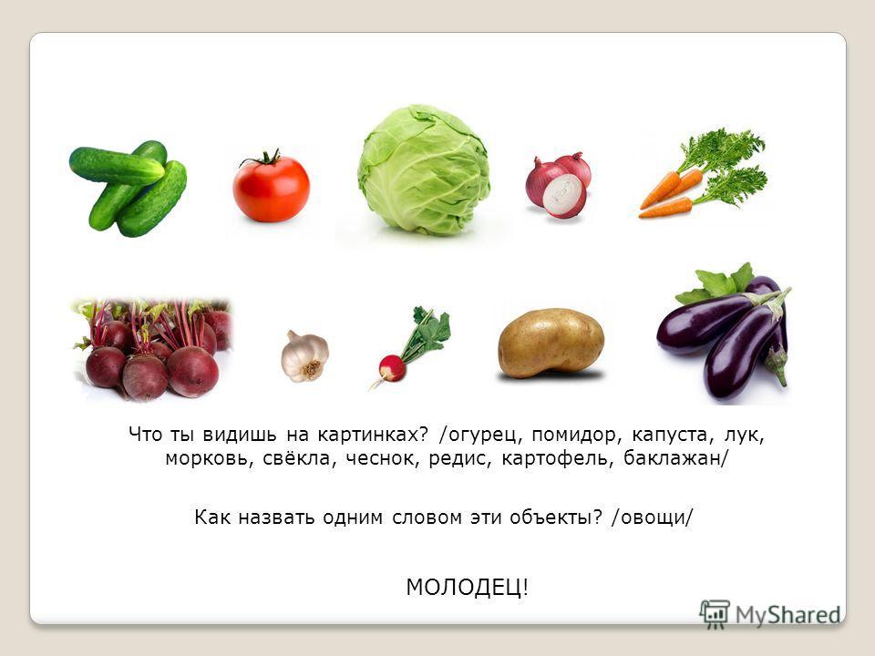 Что ты видишь на картинках? /огурец, помидор, капуста, лук, морковь, свёкла, чеснок, редис, картофель, баклажан/ Как назвать одним словом эти объекты? /овощи/ МОЛОДЕЦ!