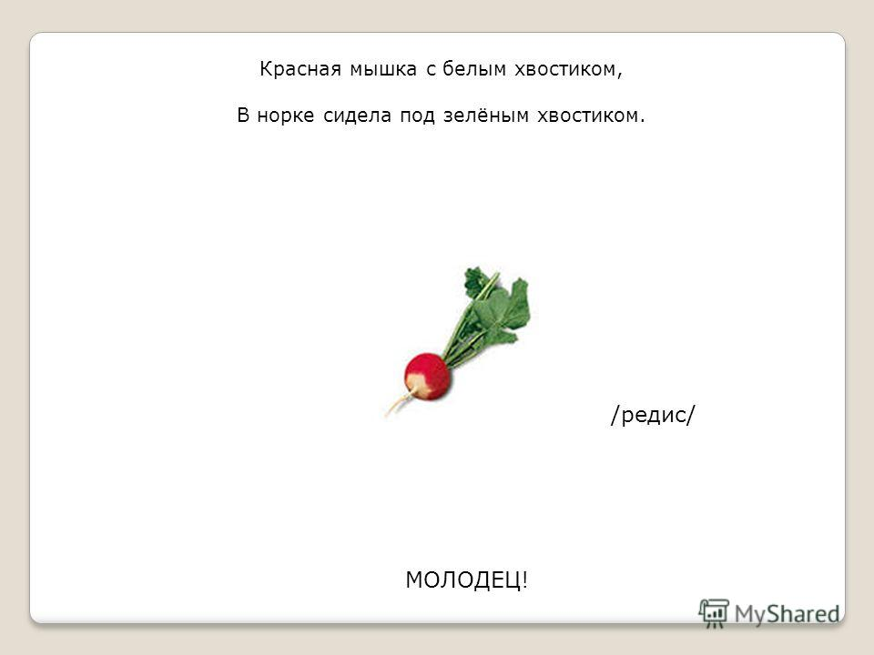 Красная мышка с белым хвостиком, В норке сидела под зелёным хвостиком. /редис/ МОЛОДЕЦ!