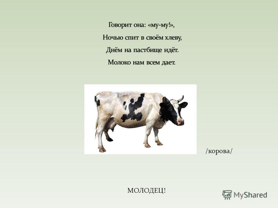 /корова/ МОЛОДЕЦ!