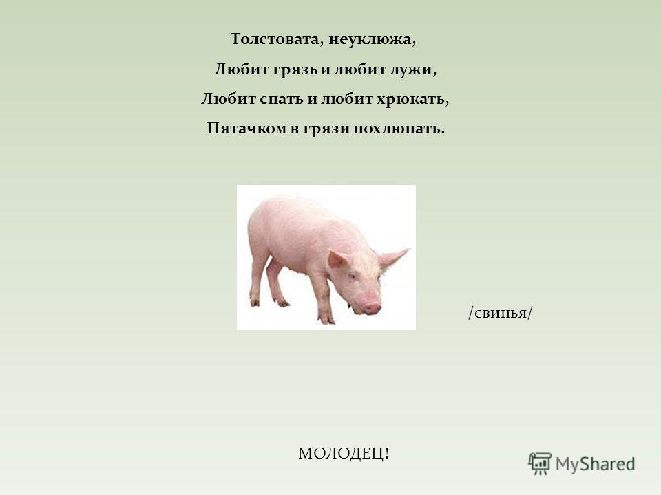 Толстовата, неуклюжа, Любит грязь и любит лужи, Любит спать и любит хрюкать, Пятачком в грязи похлюпать. /свинья/ МОЛОДЕЦ!